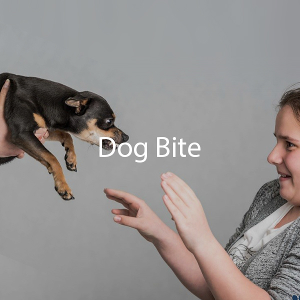 Dogs Bite Main Banner Mobile 2018